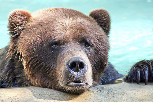Sad bear is sad.